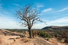 A árvore inoperante no monte avermelhado de pedra sobre o céu azul brilhante fotos de stock