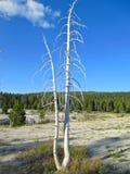 Árvore inoperante no parque nacional de yellowstone fotografia de stock