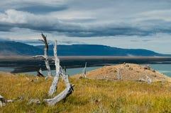 Árvore inoperante no Patagonia abandonado Fotos de Stock Royalty Free