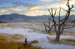 Árvore inoperante no terraço no nascer do sol Imagens de Stock Royalty Free
