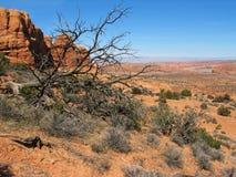 A árvore inoperante penteia o céu Imagens de Stock Royalty Free