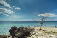 Árvore inoperante que está ainda e temperamental Fotos de Stock