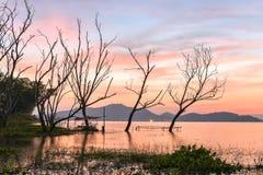 Árvore inoperante que está com o céu do por do sol foto de stock royalty free