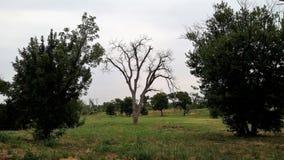 Árvore inoperante só imagem de stock royalty free