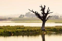 Árvore inoperante só no crepúsculo Fotografia de Stock Royalty Free