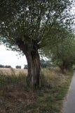 Árvore inoperante secada no prado imagens de stock royalty free