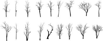 Árvore inoperante sem folhas Vecto Imagem de Stock