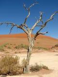 Árvore inoperante Sossusvlei Fotografia de Stock