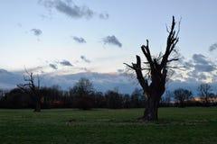 Árvore inoperante velha Foto de Stock
