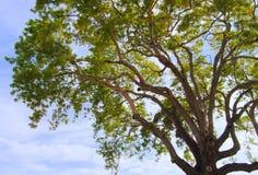 Árvore inspirada imagem de stock