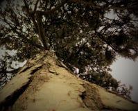 Árvore intemporal Foto de Stock