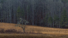 Árvore, inverno no vale de Cataloochee, nação de Great Smoky Mountains Fotografia de Stock