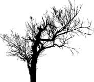 Árvore isolada - 17. Silhueta Fotografia de Stock Royalty Free