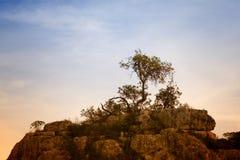 Árvore isolada foto de stock
