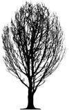 Árvore isolada Fotos de Stock