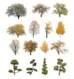 Árvore isolada Imagens de Stock Royalty Free