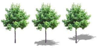 Árvore isolada com sombras Imagens de Stock Royalty Free