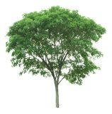 Árvore isolada em um fundo branco com trajeto de grampeamento Imagem de Stock Royalty Free