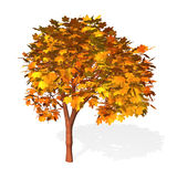 Árvore isolada no branco Imagens de Stock Royalty Free