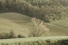 Árvore isolada no campo italiano imagem de stock royalty free