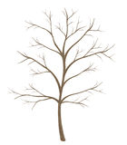 Árvore isolada no fundo branco imagens de stock royalty free