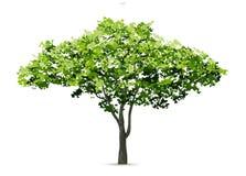 Árvore isolada no fundo branco com sombra macia ilustração do vetor