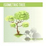 Árvore isométrica 001 Fotos de Stock