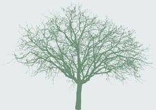 Árvore larga Imagem de Stock Royalty Free
