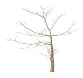 Árvore Leafless imagem de stock royalty free