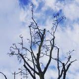Árvore leafless encaracolado fotos de stock royalty free