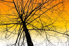 Árvore Leafless no céu fotografia de stock royalty free