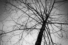 Árvore Leafless no céu imagem de stock