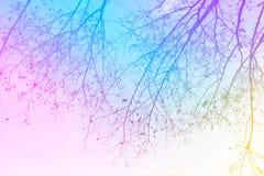 Árvore Leafless no jardim Fotografia de Stock Royalty Free