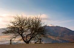 Árvore Leafless pela estrada nas montanhas foto de stock