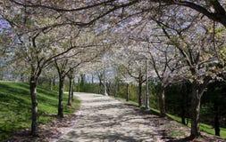 Árvore-linha caminho Imagens de Stock Royalty Free
