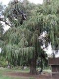Árvore longa imagens de stock royalty free