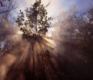 Árvore mágica Fotografia de Stock Royalty Free