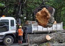 A árvore maciça cai em Christchurch, Nova Zelândia Fotografia de Stock