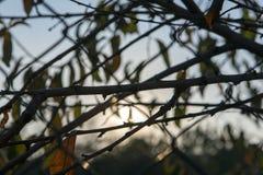 Árvore macro, no fundo com grades Foto de Stock
