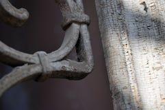 Árvore macro, no fundo com grades Fotografia de Stock