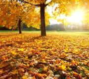 Árvore magnífica Fotografia de Stock