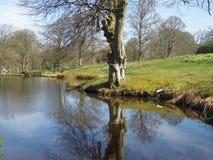 Árvore majestosa Imagem de Stock