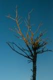 Árvore minimalista Fotos de Stock Royalty Free