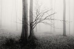 Árvore misteriosa na floresta nevoenta Fotos de Stock