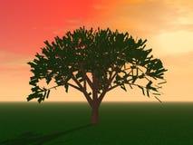 A árvore misteriosa no campo ilustração stock