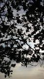 Árvore modelada Foto de Stock