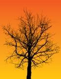 Árvore mostrada em silhueta ilustração royalty free
