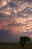 Árvore mostrada em silhueta contra nuvens do mammatus Fotografia de Stock