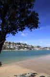 Árvore mostrada em silhueta na praia Cornish Fotografia de Stock Royalty Free