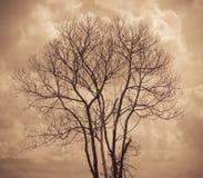 A árvore não é folhas e ramo da árvore inoperante com o céu escuro da nuvem Imagens de Stock Royalty Free